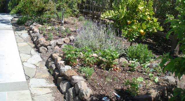 Landscape Design: Sustainable Landscaping, Edible Gardening